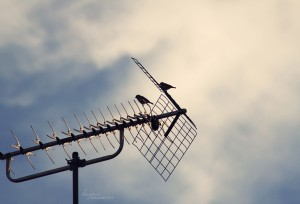 Bad tv reception caused by birds